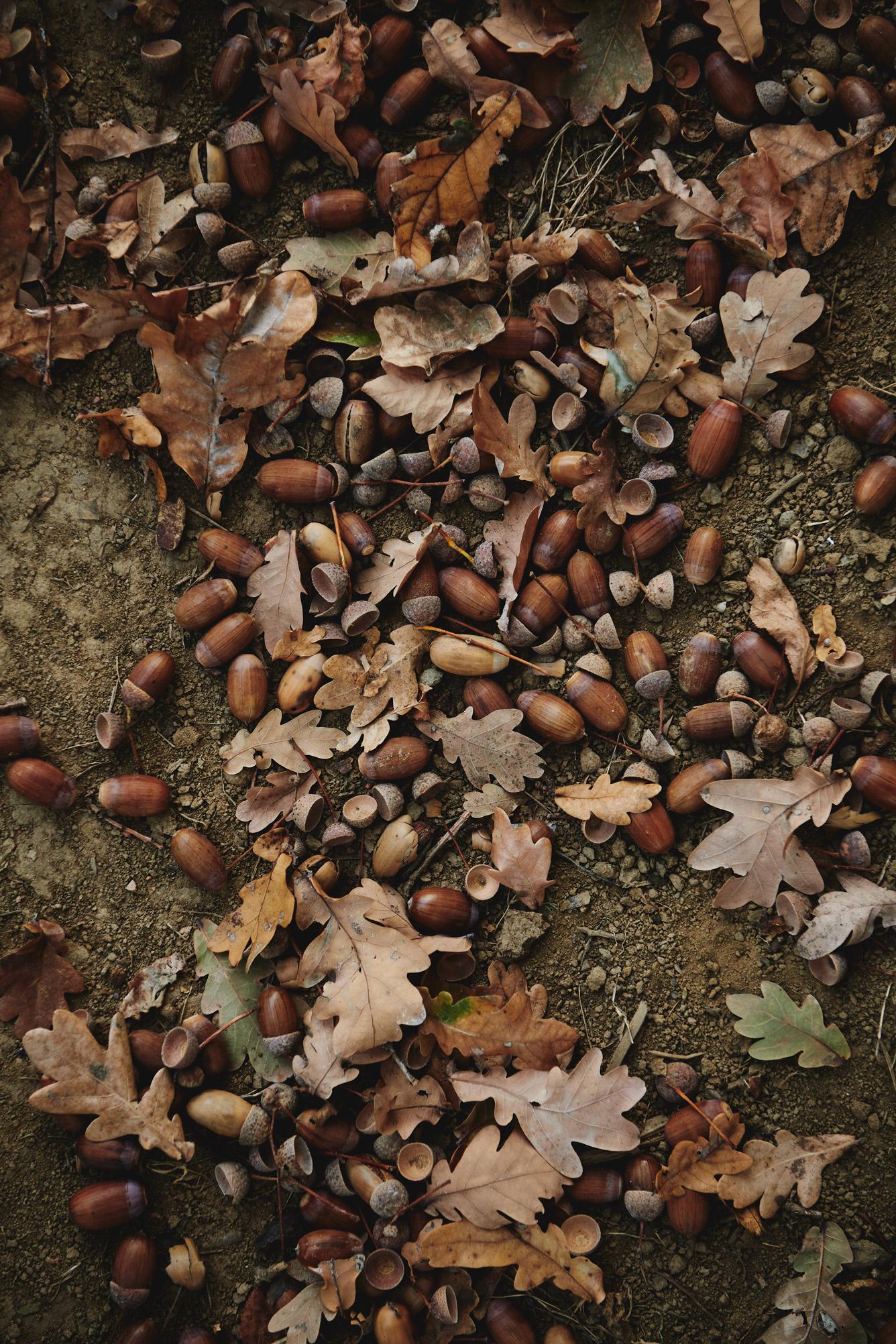 stk-wein-frauwallner-nature-soil-floor