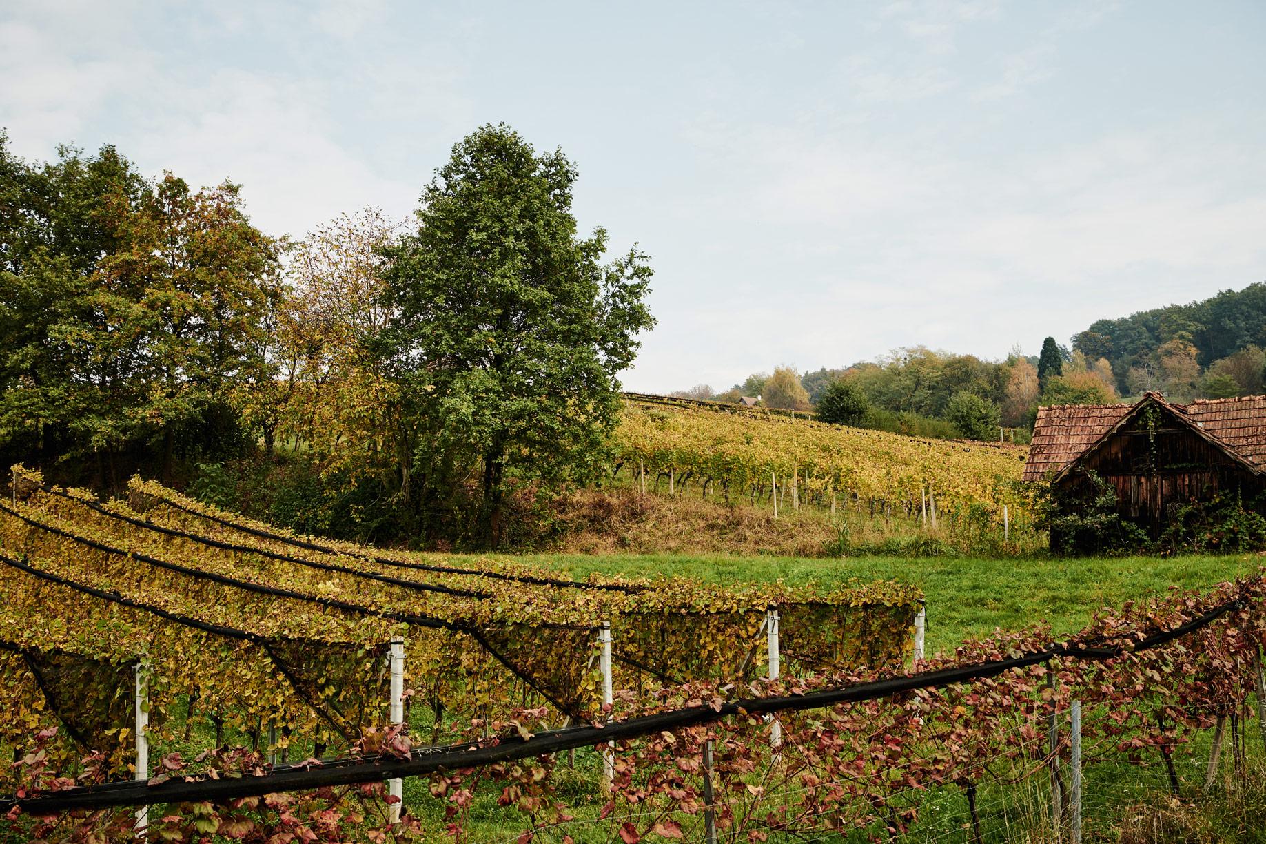 stk-wein-frauwallner-wine-nature-grapes-trees