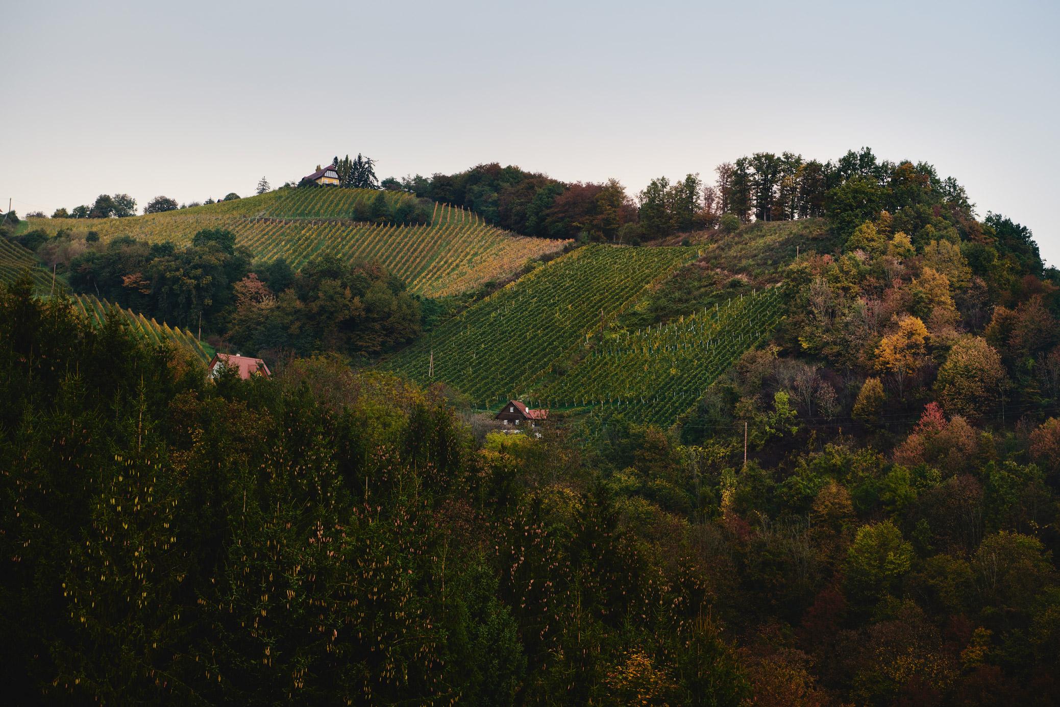 stk-wein-wohlmuth-nature-steep-hill-steiermark-austria-styria