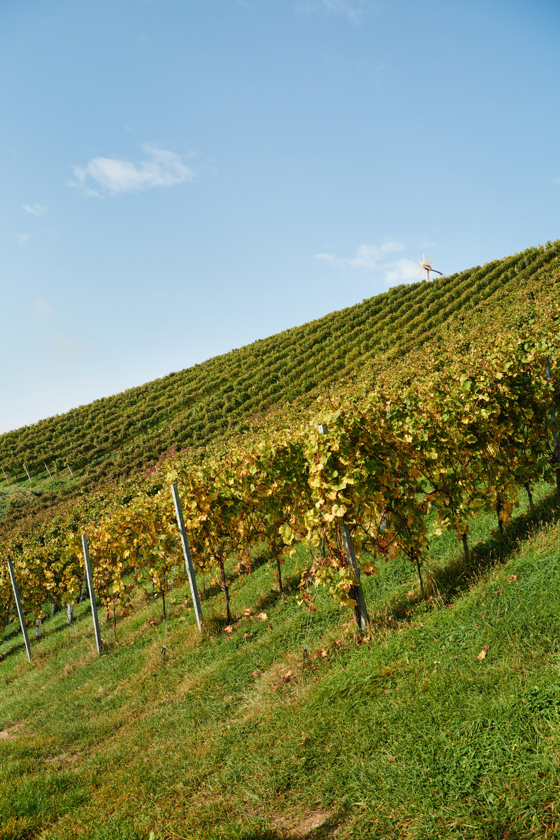 stk-wein-wohlmuth-nature-steep-hill-steiermark