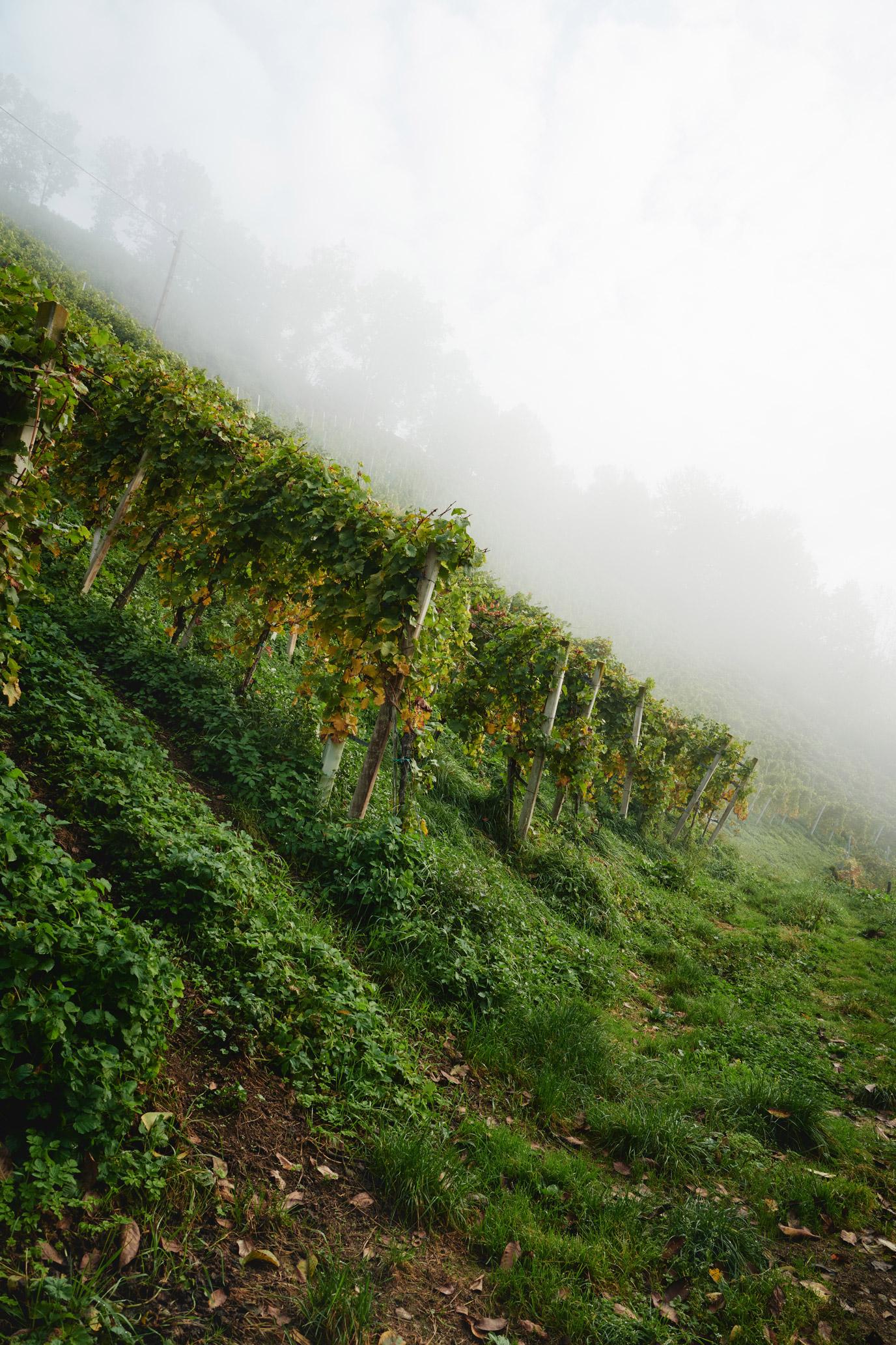 stk-wein-wohlmuth-wine-steep-hill-fog